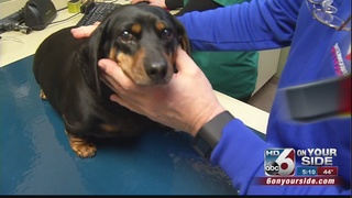 Hospice program brings pet owners peace of mind