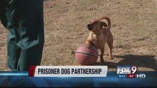 Program partners prisoners with shelter dogs
