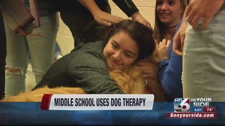 Therapy dogs bring relief to anxious students