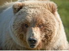 6 ways to survive a bear attack