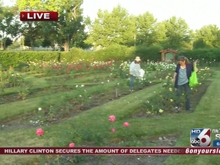 Garden club helps keep roses blooming, beautiful