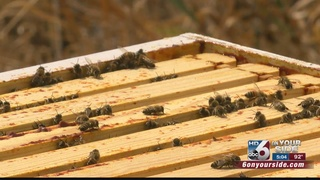 State honey bee protection plan is all a buzz