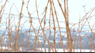 Harsh winter could drive prices up at store