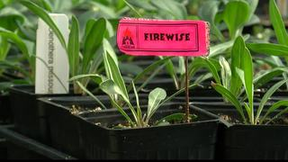 Homeowners asked to consider firewise plants