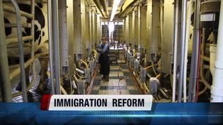 Idaho dairies seek immigration reform
