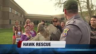 Hawk snagged by kite string rescued in Nampa
