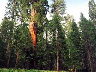 No vote on Giant Sequoia Monument downsizing