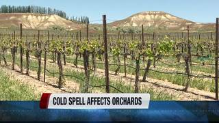 Planting underway; orchards face some challenges