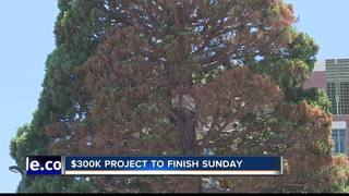 Boise gets ready for Giant Sequoia move