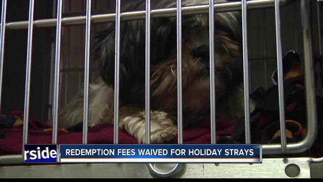 Animal Services receives dozens of dogs who were scared away by fireworks