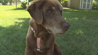 Dog survives 9 months in the Idaho mountains