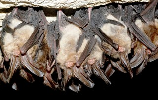 Rabid bats found in the Gem State