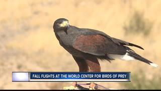 Flying high at World Center For Birds Of Prey