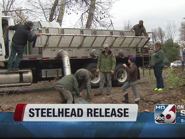 Idaho fish and game officials release steelhead into boise for Idaho fish and game