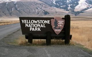 Woman rescues wandering llama from Yellowstone