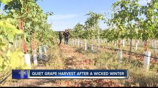 Local vineyards still reeling from harsh winter