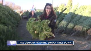 Christmas tree shortage bumping prices up