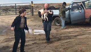 Missing dog survives 15 days in the Boise desert
