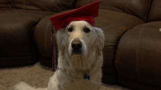 Service dog to graduate at Melba High
