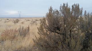 Some say efforts failing to save sagebrush land