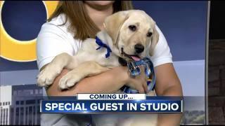 'Meet and Greet' Idaho's Canine Companions