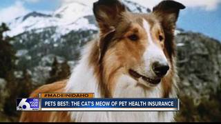 Pets Best is cat's meow in pet health insurance