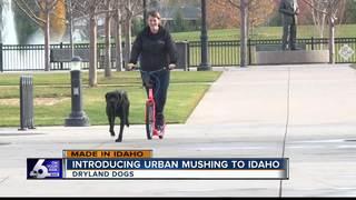Made in Idaho: Dryland Dogs
