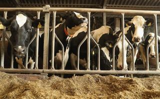 Idaho to pay $260,000 in dairy spying suit